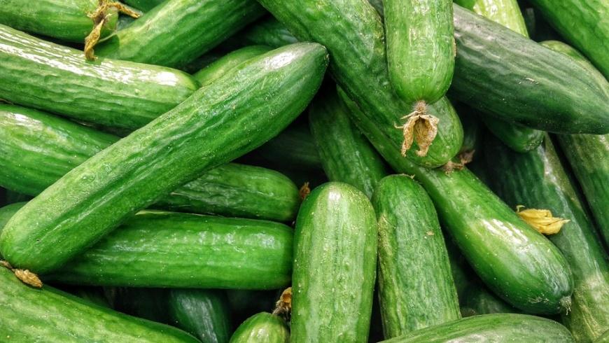 Grüne Bio-Gurken