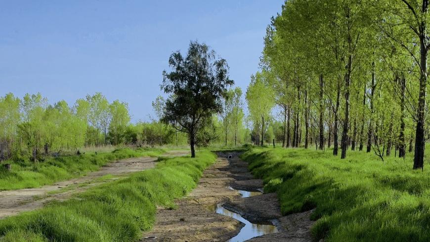Rieselanlage mit Klarwasser bei Hobrechtsfelde