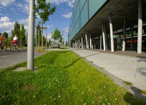Berlin: Umbau zur Schwammstadt
