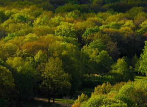 Dichter Parkbaum-Bestand in einem Berliner Park - Foto: Pixabay