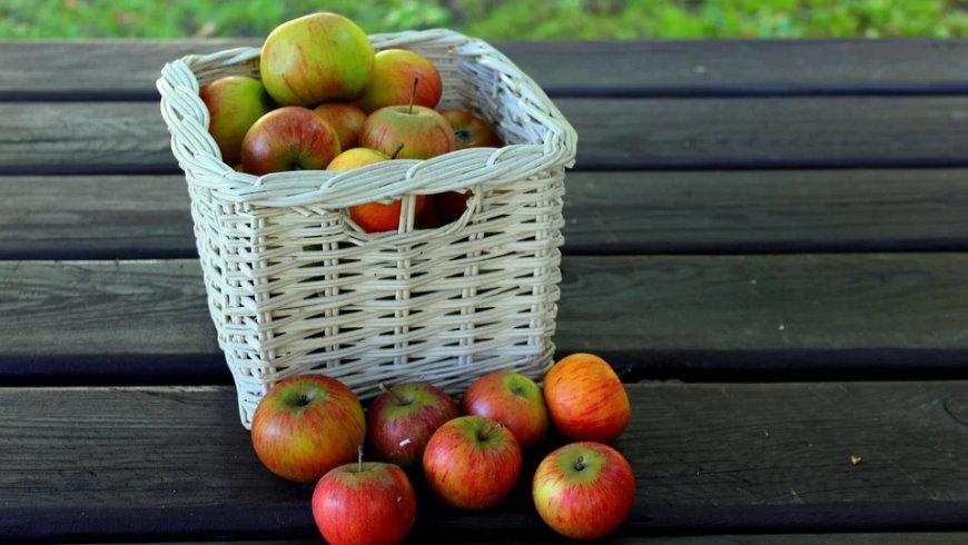 Äpfel bitte sammeln!