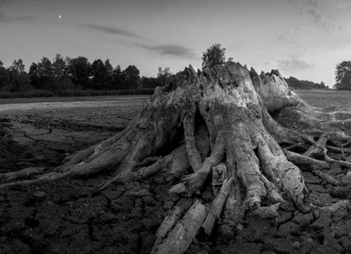 Baumstumpf am Flußufer