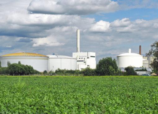 Zuckerrüben-Feld vor einem Nordzucker-Standort